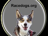 Racedogs.org